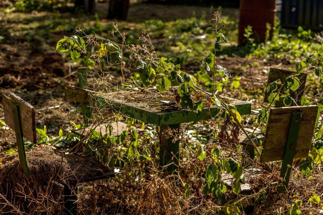 Verdorrte Pflanzen